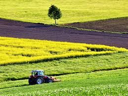 proizvodnja-i-otkup-poljoprivrednih-proizvoda-kula-|-zemljoradnicka-zadruga-agronika