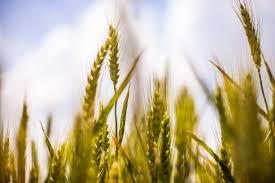 otkup-poljoprivrednih-proizvoda-beograd-dobanovci-|-zz-buducnost